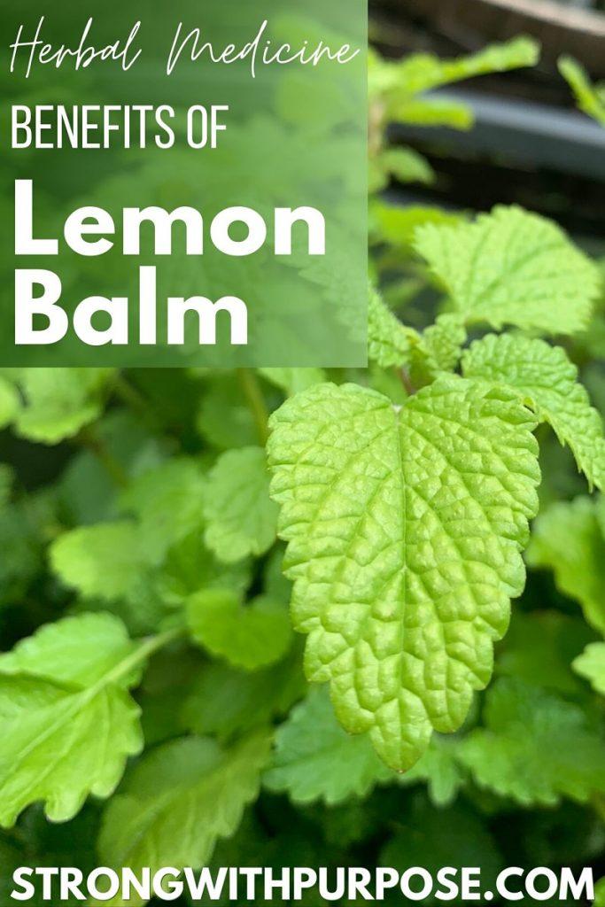 Herbal Medicine Benefits of Lemon Balm - Strong with Purpose