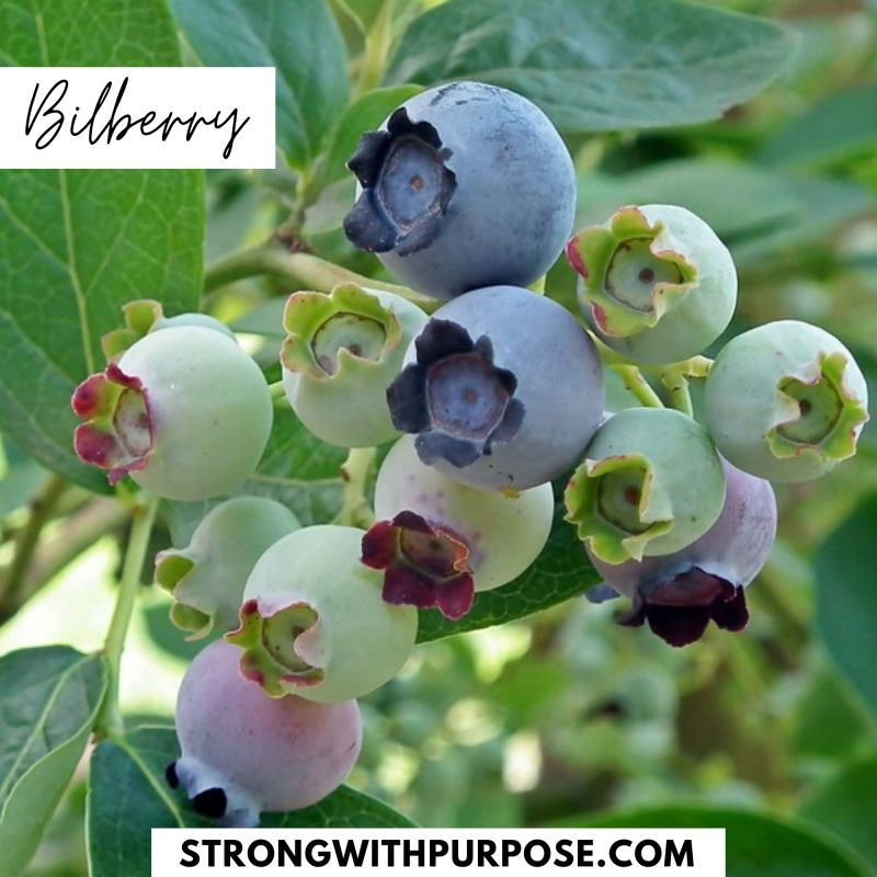 Bilberry - 5 Natural Remedies to Improve Your Eye Health - Strong with Purpose
